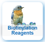 Biotinylation Reagents