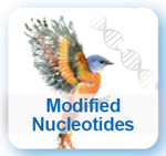 Modified Nucleotides