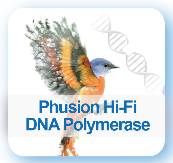 Phusion high-fidelity DNA polymerase